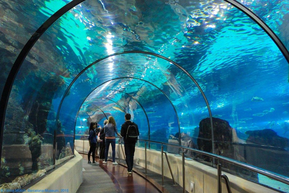 Aquarium Museum   Aquarium Port Vell Mumabroad