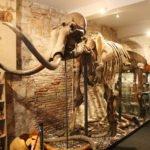 Mammoth Museum, Gotico