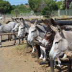 Burrolandia Donkey Refuge