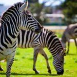 Safari-Zoo, Porto Cristo