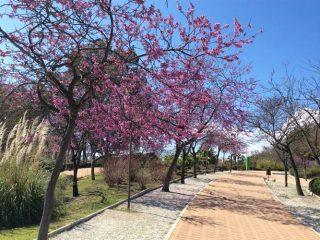 Parque de Paloma, Benalmádena