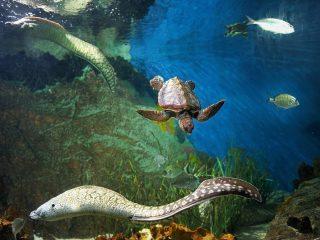 Aquarium Almuñécar