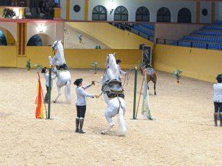 Horse Riding, Estepona