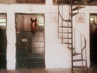 Horse Riding at Villa Glori