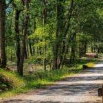 Bouconne Forest, Pibrac