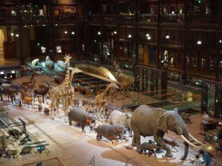 La Grand Galerie de l'Evolution