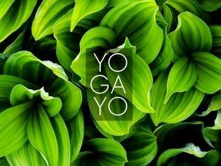 Yogayo, Arenys de Mar